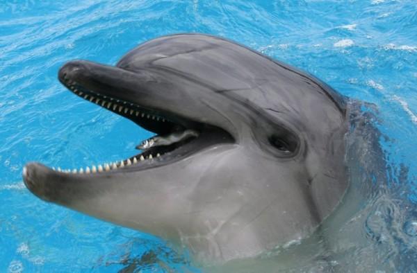 AKWAVIT Delfine 100 Tabletten