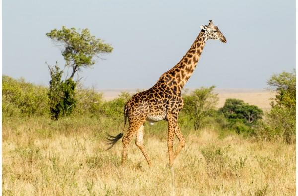 Giraffen, Okapi & Antilopen Premium Müsli 15 kg