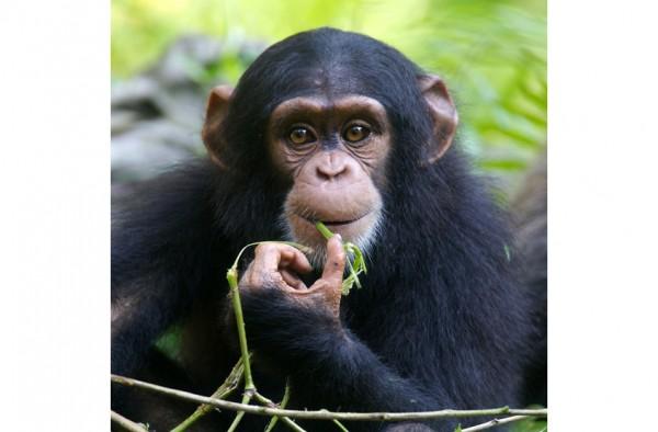 Primaten Strukturmüsli 15 kg