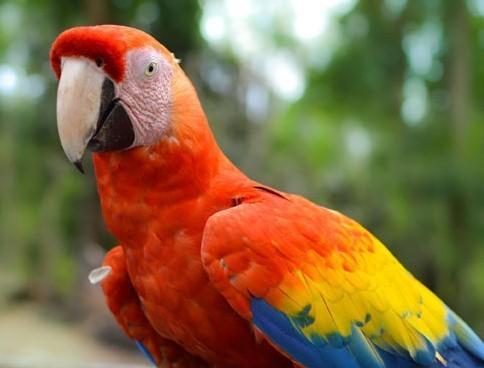 Parrot mixture Suprema 15 kg