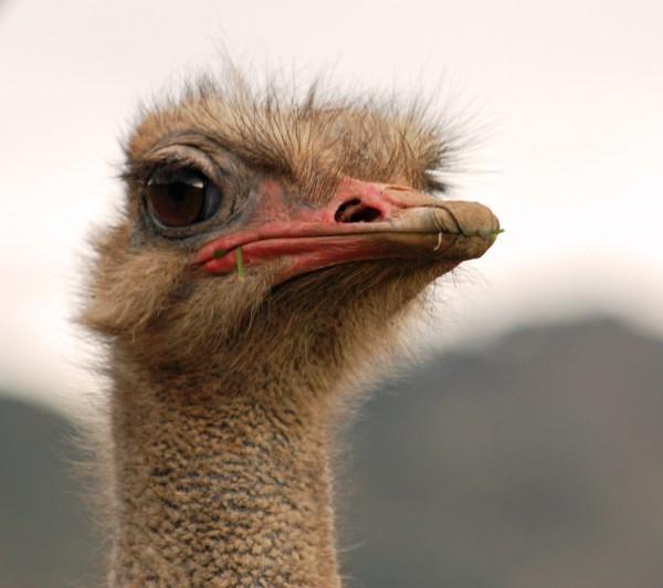 Laufvogelpellets - für Strauße, Emus, Nandus und Kasuare 25 kg
