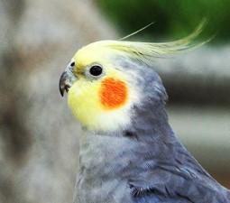 Parakeet seed 20 kg