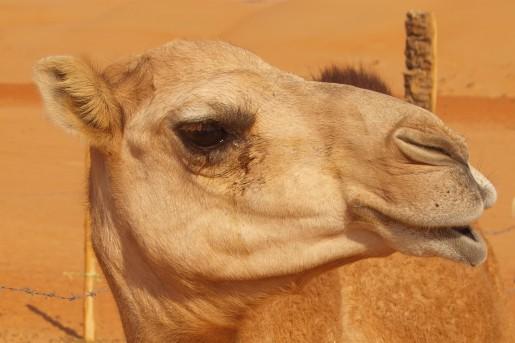 KameleA556d75fdb3165