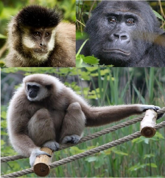Primate mix Vit. D3 0,4 kg